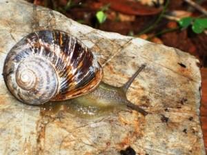 Μελέτη βιοποικιλότητας του Μεγανησίου