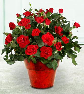 Смотреть фото цветы вгошках живые купить комнатные цветы в минске оптом