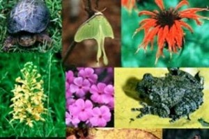 Στη Βουλή το νομοσχέδιο για τη βιοποικιλότητα