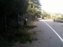 Ανακοίνωση Δήμου Μεγανησίου για το κόψιμο κλαδιών