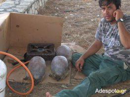 Λευκάδα: Αθίγγανοι ψήνουν ζωντανούς σκατζόχοιρους και τους τρώνε