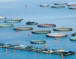 Διαμαρτυρία σχετικά με χωροταξικό σχεδιασμό υδατοκαλλιεργειών