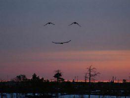 Ένα χαμόγελο από τον ουρανό