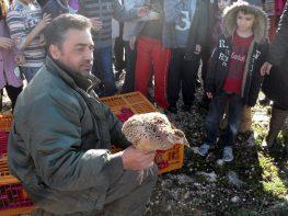 Απελευθέρωση Κολχικού Φασιανού στο Μεγανήσι