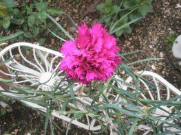 Λουλούδια, μπας και ξορκίσουμε τον χειμώνα…