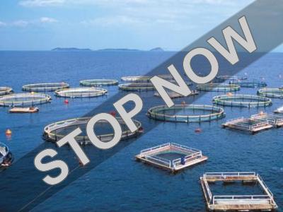 Υπενθύμιση Πανελλήνιας Συντονιστικής Επιτροπής κατά του Χωροταξικού των Υδατοκαλλιεργειών