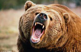 Η αρκούδα και η σφαίρα