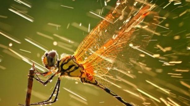 Η καλύτερη φωτογραφία του 2011 από το National Geographic