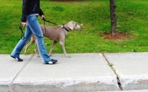 βολτα-με-σκυλο