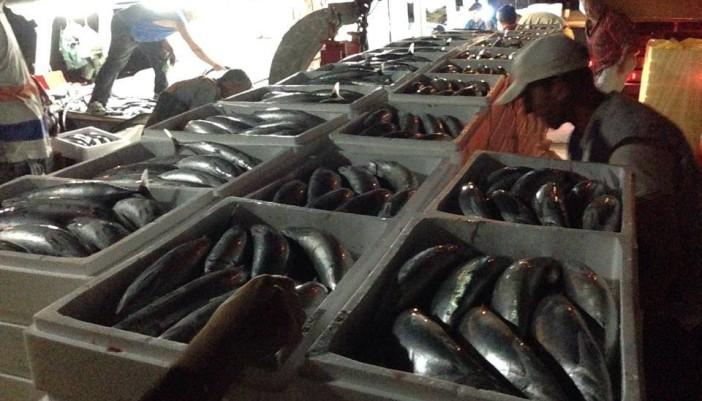 """Η μεγαλύτερη ψαριά στο Ιόνιο το γρι – γρι ¨ΣΤΑΘΗΣ"""" από το Μεγανήσι"""