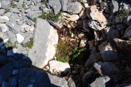 Archaeotour: Η έρευνα, μια διάκριση, διπλή χαρά
