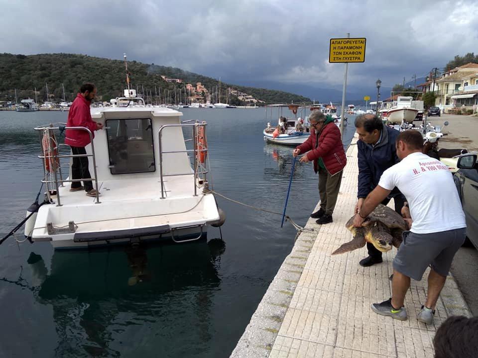 Διάσωση Χελώνας Καρέτα – Καρέτα στον Αθερινό στο Μεγανήσι