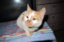 «Βησσαρίωνας» ο τυχερός Μεγανησιώτης γάτος