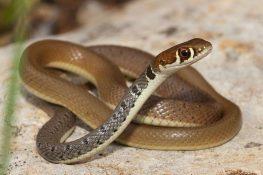 Φίδια κόβουν βόλτες στο δημοτικό σχολείο!