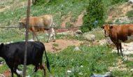 Ψηφίστηκε τροπολογία του Θανάση Καββαδά για τα ανεπιτήρητα – Ανοίγει ο δρόμος για την περισυλλογή των ζώων με αναισθητοποίηση