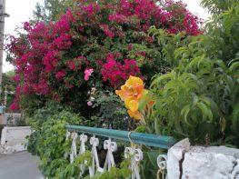 Λουλούδια στις αυλές