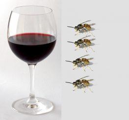 Εν τη ερήμω: «Κρασάκι και…σφήκες»